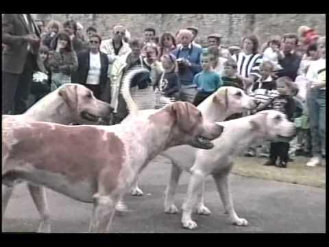 Duke of Beaufort's Foxhound Pack   Open Day 1992