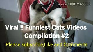 Viral !! Funniest Cats Videos Compilation #2 #Funniestcatsvideos #Funnycats