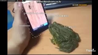 [티비플] 스마트폰으로 두꺼비 농락하기 ㅋㅋㅋ