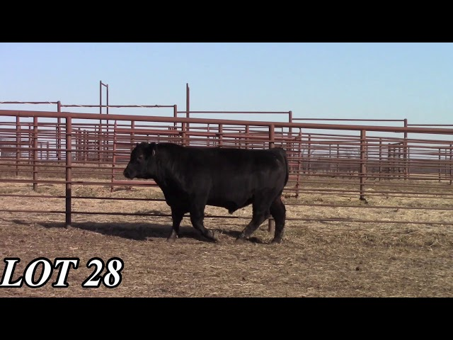 Mead Angus Farms Lot 28