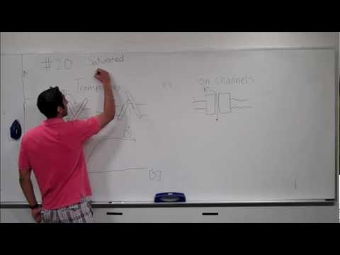 What is the difference between a transporter and an ion channel...