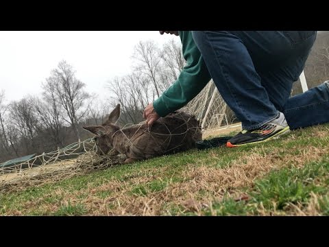Thumbnail: Deer Rescued From Being Trapped In Net