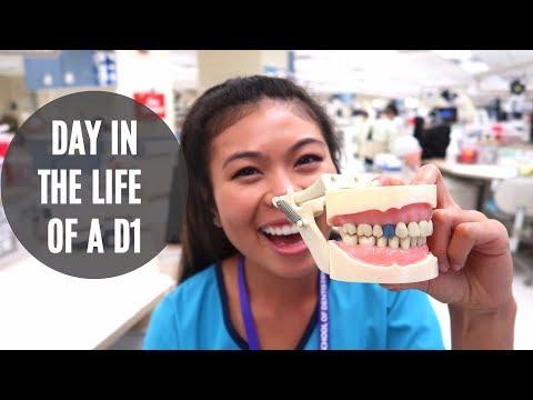 MY FIRST DENTAL SCHOOL VLOG // LauraSmiles Vlog #1