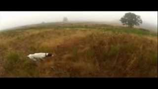 Pheasant Hunting With My German Shorthaired Pointer Gretchen In Washington State
