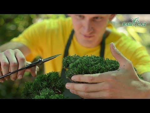 Правила стрижки и ухода за деревьями Бонсай от специалиста компании Ваш сад
