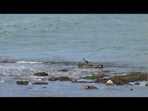 Seal colony  in Árainn.
