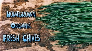 Perennial chives - plant it once & enjoy it for years!