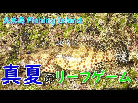 Kumejima Fishingisland movie 真夏のリーフゲーム