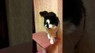 Громадные блохи у кота!!!)))