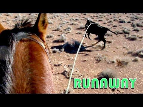 Runaway!!