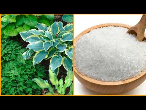All About Epsom Salt(क्या,कैसे और कब उपयोग करे)