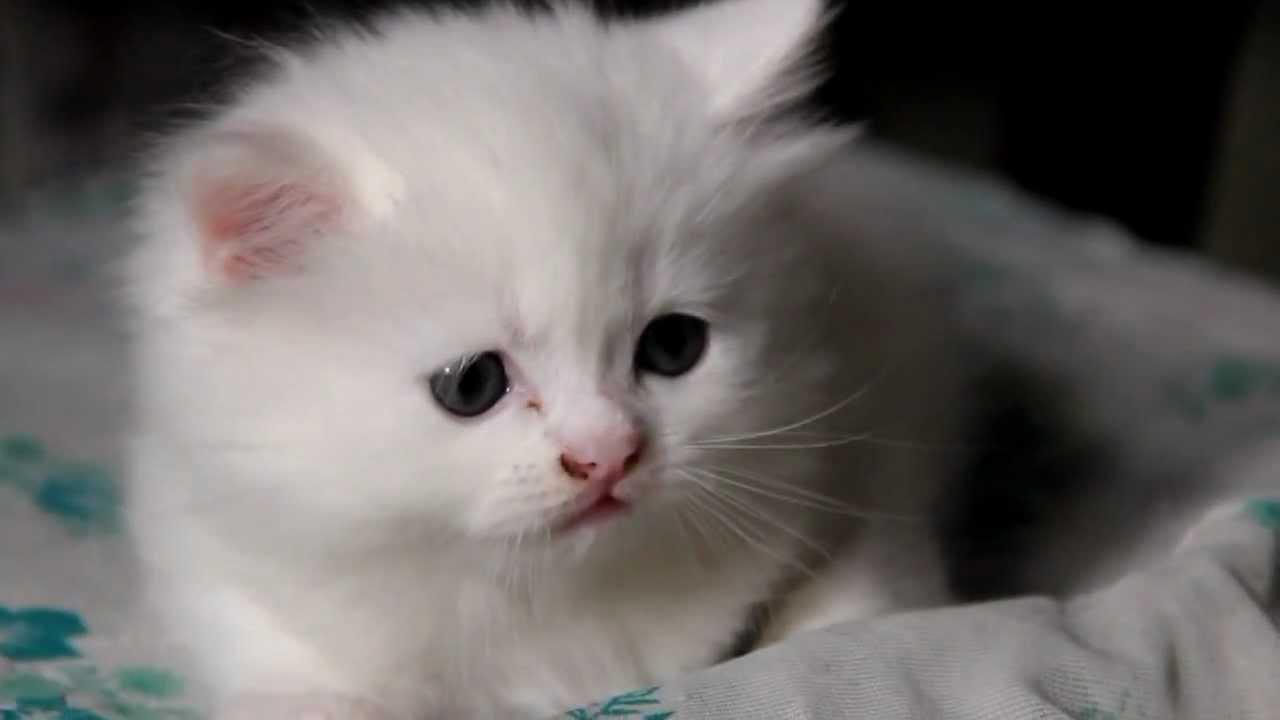 Ржачный пушистый котенок Fluffy Kitten Is Confused - YouTube