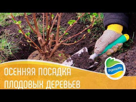 Вопрос: Находили ли вы в лесополосах и обочинах дорог плодовые деревья (см)?
