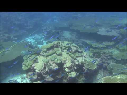 Coral recovery from bleaching, Butaritari, Kiribati