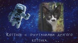 Котёнок с очертаниями другого котёнка