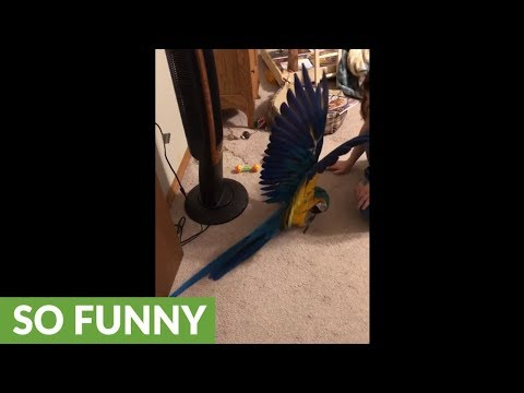 Parrot very protective of her toy puppy