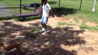 サッカーの練習をコーギーとする少年