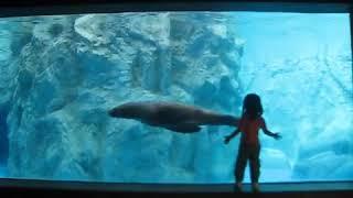 ズーラシアのオットセイ Seal at Zoo