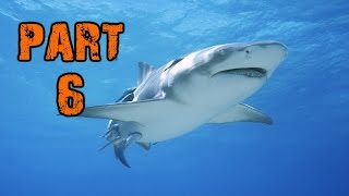 The Fgn Crew Plays: Depth Part 6 - Shark Attack (pc)