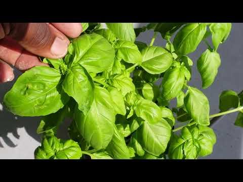 Spring Gardening   Home Garden DIY