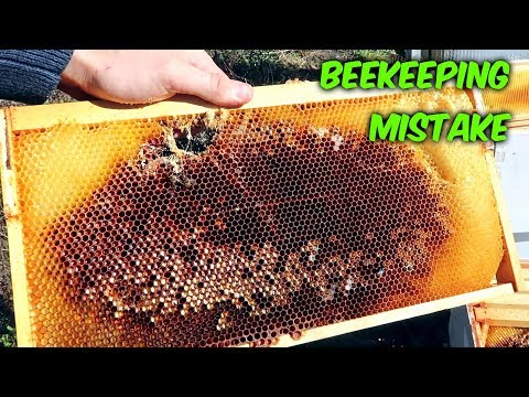 Bad Beekeeping Problem