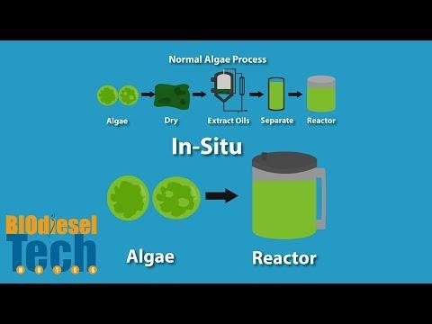 Biodiesel Production Methods