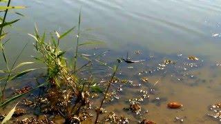 Анаконда в России. Волгоградская область. Anaconda in Russia. Volgograd region.