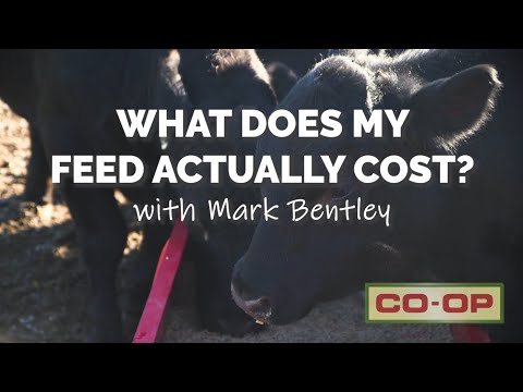 How Much Does Feed Actually Cost?