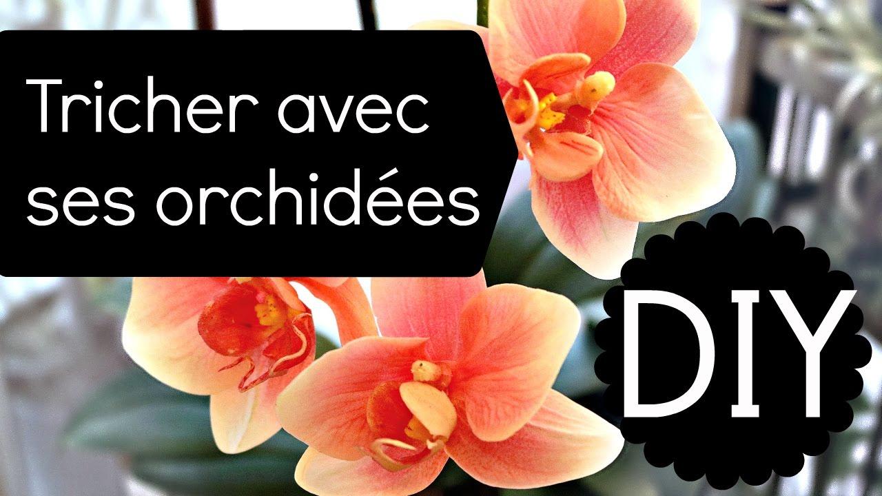 orchidee a perdu ses fleurs