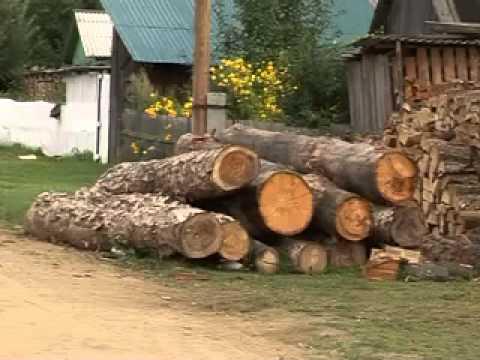 Жители с.Березовка в Чугуевском районе встали на защиту местных лесозаготовителей. Видеорепортаж