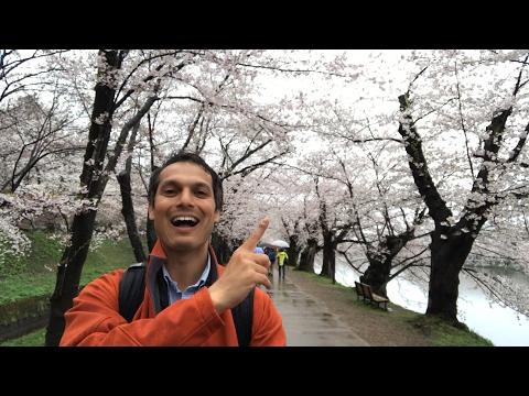 Cherry Blossom Tunnel in Hirosaki