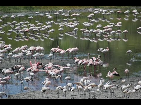 Tanzania Safari Tour, Arusha National Park, Arusha - Wildlife
