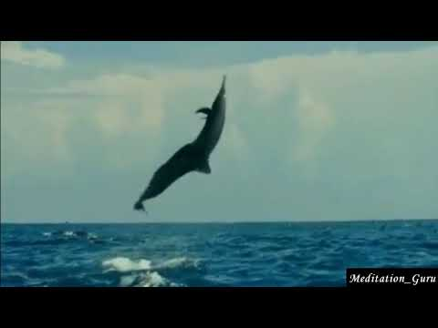 Dolphins and ocean sounds for meditation, relaxation, yoga and studies 30 min