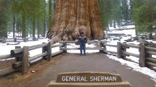 California February 2015: Sequoia National Park, General Sherman Tree, Giant Forest