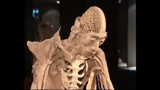 Выставка «Тайны тела. Вселенная внутри»