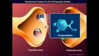 mechanisms of action of 5 ht ne reuptake inhibitor