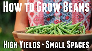 How to Grow Bush Beans - Ultimate Guide For High Yields