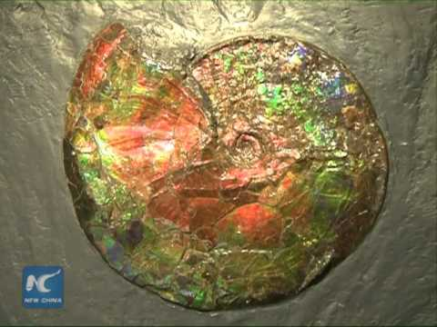 Rare, Colorful Fossils Displayed In NE China