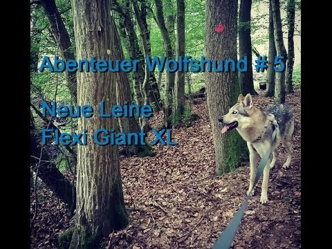 Abenteuer Wolfshund # 5 - Neue Leine Flexi Giant XL