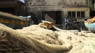 Maré Leste | trailer