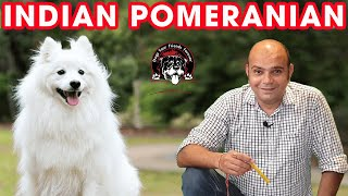 Pomeranian The Cute Watch Dog (Pet Puppy) || Indian Spitz Dogs and Breeds || Baadal Bhandaari