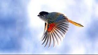 США 2527: Тирлим-бирлим - Птичка Божия...