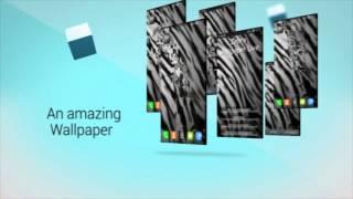 Zebra Wallpaper Live