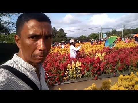 Wisata Syariah Taman Bunga Colosia Panga Aceh Jaya