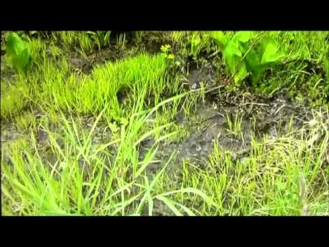 Whistleblower Exposes Michigan Oil Spill Coverup & elsewhere