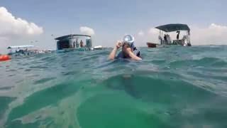 lovinadolphintours Bali Half Day Tour