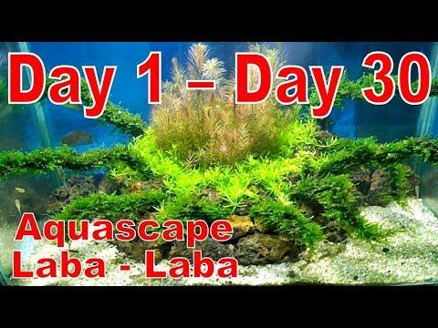 Cara Membuat Aquascape Untuk Pemula Tema Natural 1 - YouTube