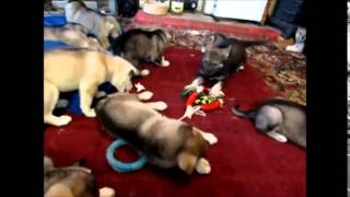 Tundra 39 S 2014 Pups Sounds For Life