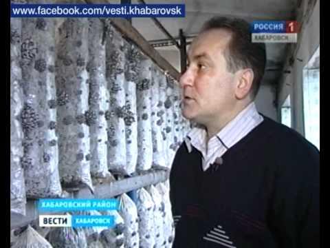сбыт рынка грибов вешенка