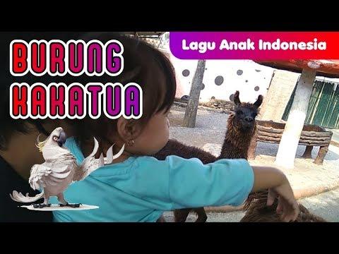 LAGU ANAK INDONESIA TERPOPULER 2017 ❤ BURUNG KAKAK TUA ❤ VERSI BARU
